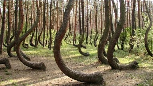 7 CREEPIEST Forests in the World