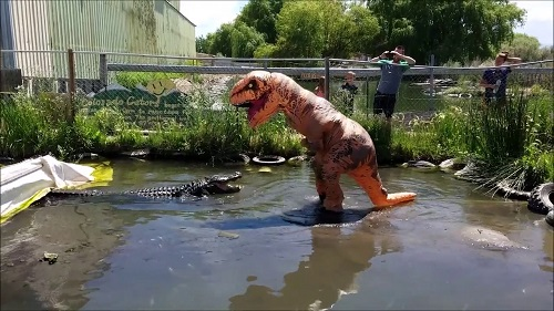Moron Decides To Tease Enormous Alligator While Dressed As A T-Rex