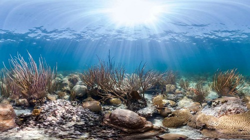 Florida's Long Lost Coral Reefs